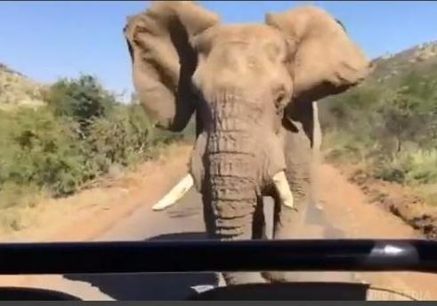 За Шварценеггером в Африці ганявся дикий слон