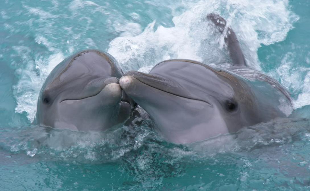 1Как устроены дельфины