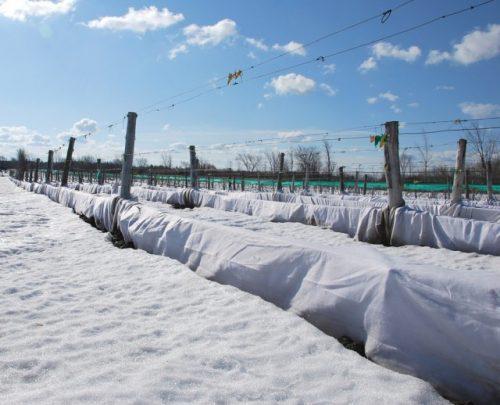 4 Зимнее укрытие винограда