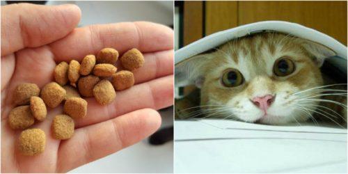 Как сделать корм для кота