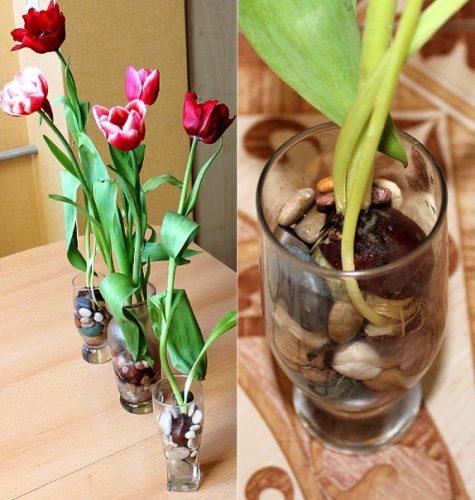 Как сажать семена тюльпанов из китая 11