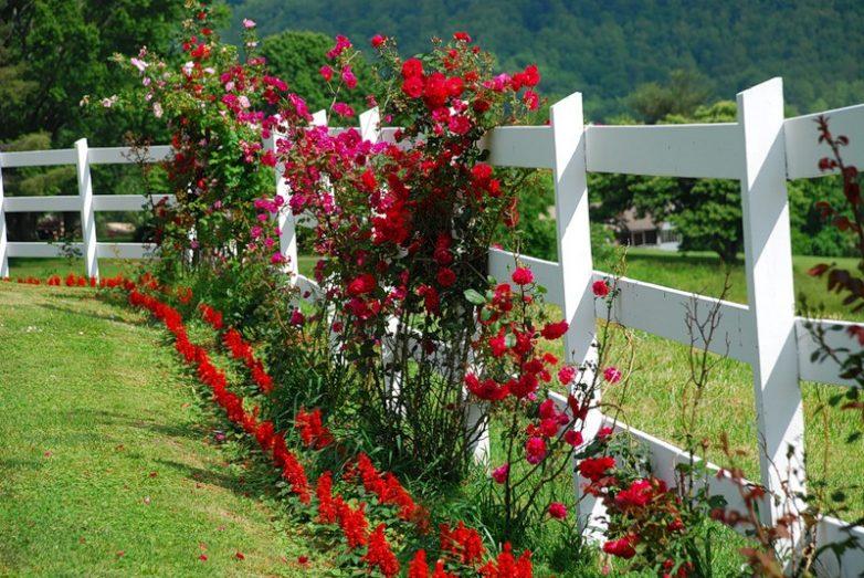 Какие цветы сажают за забором