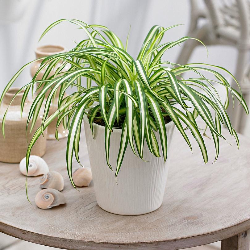 растения, которые уменьшают беспокойство фото 7