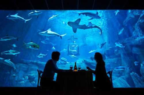 small-ubi-bene-shark-suit-3
