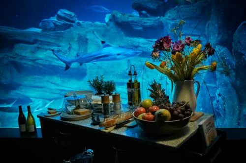 small-ubi-bene-shark-suit-4
