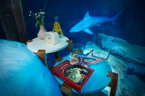 small-ubi-bene-shark-suit-5