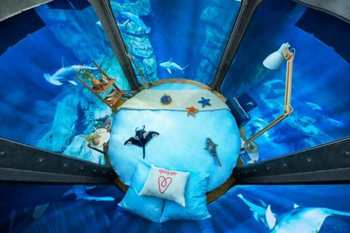 small-ubi-bene-shark-suit