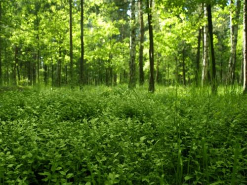 Free deep forest wallpaper download the free deep forest wallpaper e1462544218345
