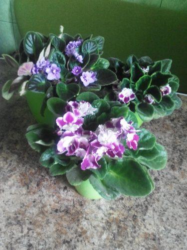 Фиалковые фантазии. Удивительные цветы! / © novuyden.com