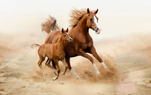 Лошади «читают» людей