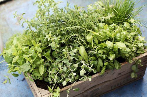 Как дольше сохранить зелень свежей(1)