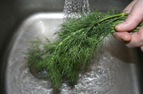 Как дольше сохранить зелень свежей(2)