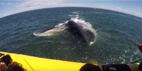 2048x1536 fit immense baleine passee sous embarcat e1470234373219
