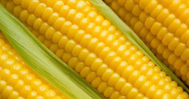 Кукурузные волокна оказались полезны для женских костей