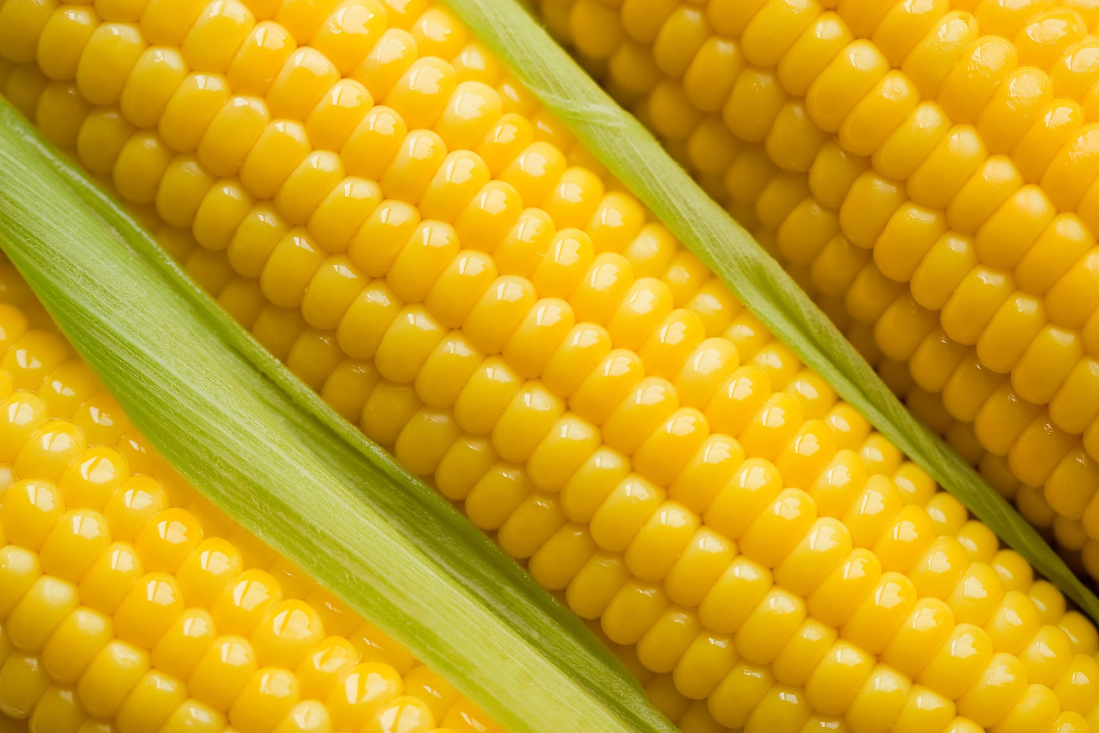 corn21