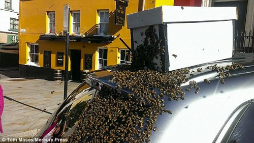 Рій бджіл