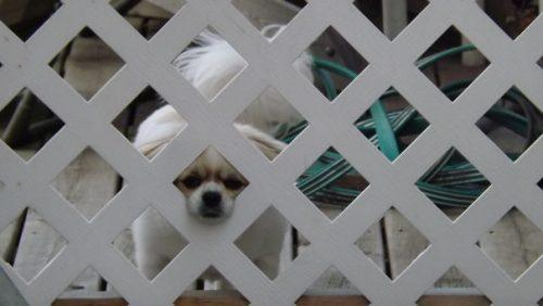Beware of dog 018 2 57eeca05990b6  605