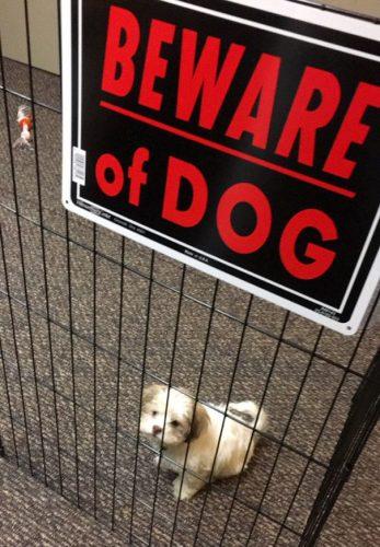 beware Of The Dog Signs 01 57ee6e39eca7d  605