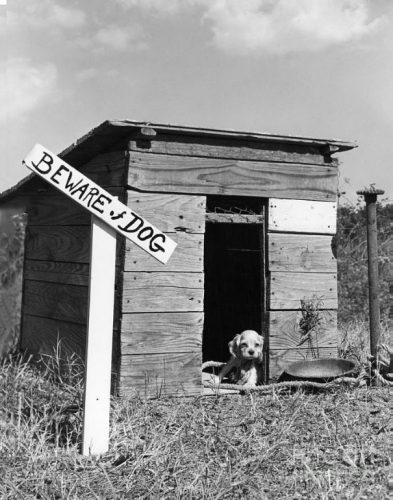 beware Of The Dog Signs 02 57ee702a187d7  605