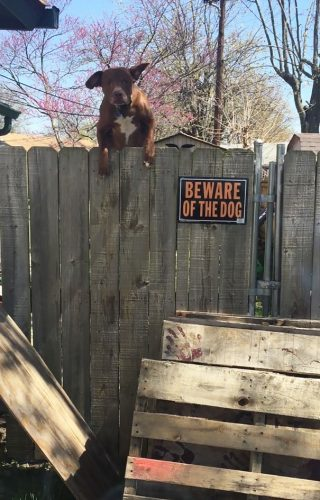 beware of the dog 1 57ee556b7835d  605