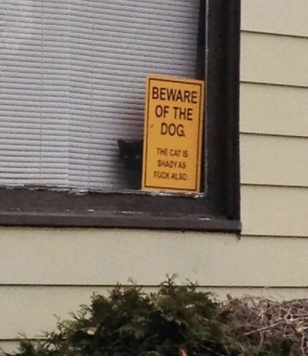 beware of the dog 11 57ee5605bc257  605