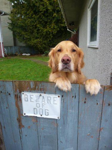 beware of the dog 12 57ee561326215  605
