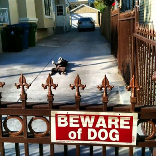 beware of the dog 13 57ee56356ae51  605