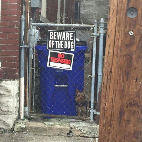 beware of the dog 2 57ee55770ead6  605