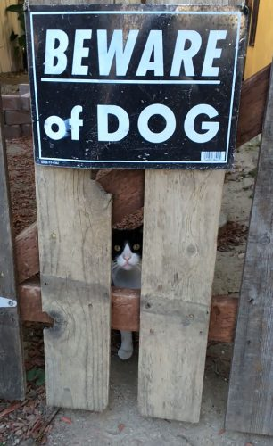 beware of the dog 4 57ee55926c554  605