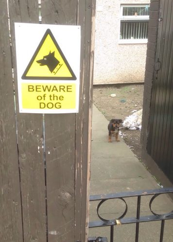 beware of the dog 9 57ee55e6ba3dc  605