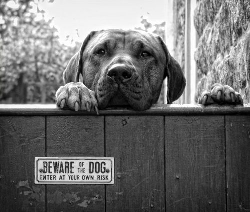 beware of the dog signs 26 57ee66ad8b81d  605