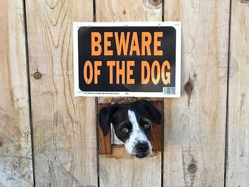 beware of the dog signs 29 57ee6b29e66c8  605