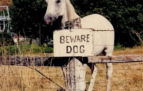 beware of the dog signs 33 57ee6b8bf0ed5  605