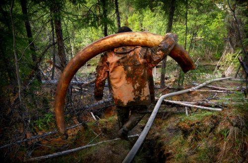 1охота за бивнями мамонтов