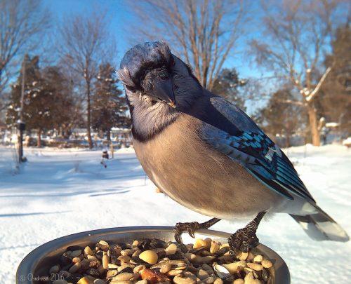 Женщина подкармливает птиц, чтобы снимать потрясающие фотографии