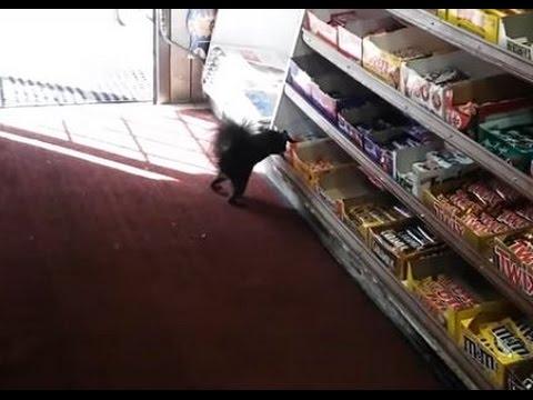 Ограбление магазина белками стало хитом интернета