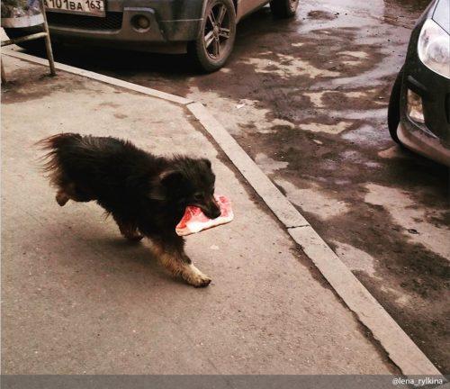 Воришки: кошки и собаки, пойманные на месте преступления