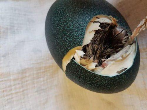 Какой птицы это яйцо?