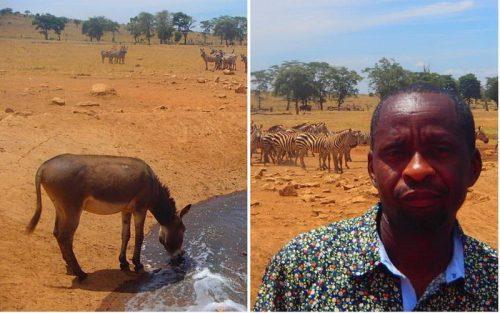 Спасение животных от засухи: мужчина ежедневно привозит воду в кенийский парк