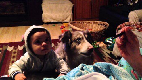 Родители учат малыша говорить «мама»… Только послушайте, что выдала их собака!