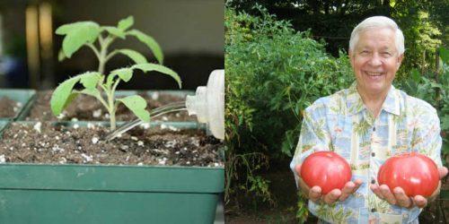 Пересадка орхидей в домашних условиях  FloweryValeru