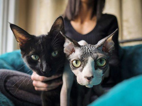 $700 за лысого кота породы Сфинкс. Но знаете, кто это был?