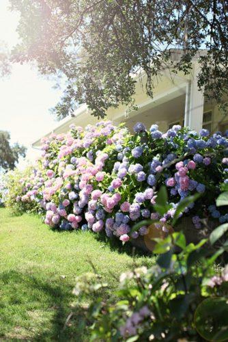 «Цветок — фиолетовое солнце»