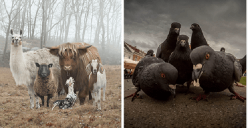 Животные, которые думают, что участвуют в фотосессии