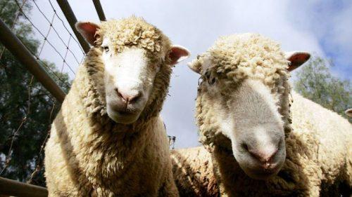 animals about to drop album photos 101 58aef99a61e5e  700