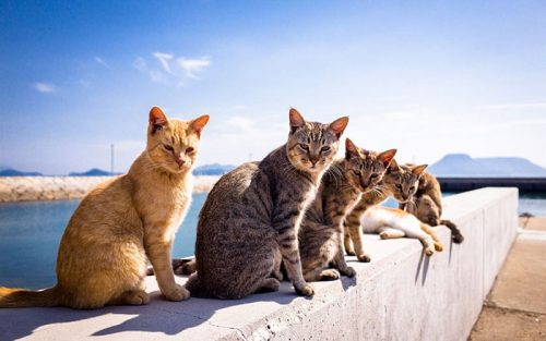 animals about to drop album photos 110 58aefbd090ef5  700