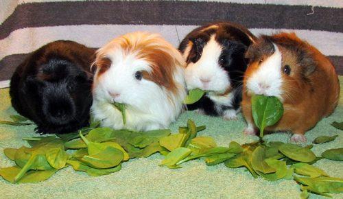 animals about to drop album photos 35 58aee8156747f  700