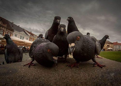 animals about to drop album photos 58aeb0ce59ff1  700