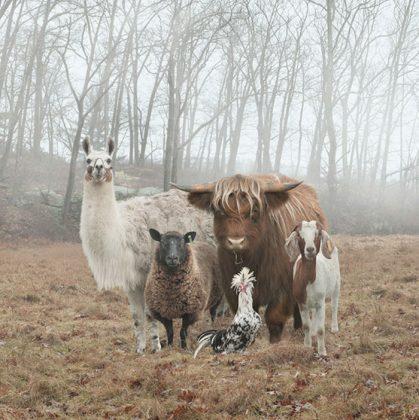 animals about to drop album photos 58aeb2b30934d  700 419x420