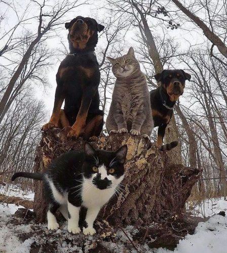 animals about to drop album photos 58aeb53dc7580  700